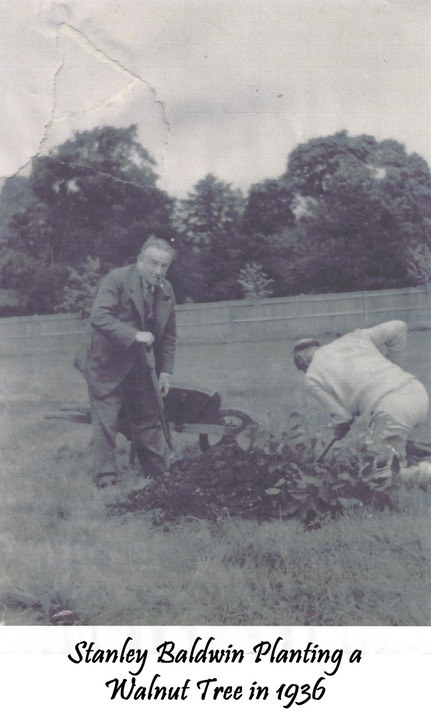 Stanley Baldwin planting a walnut tree in 1936